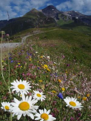 花のトレイル