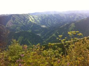 馬頭刈尾根から富士山方面